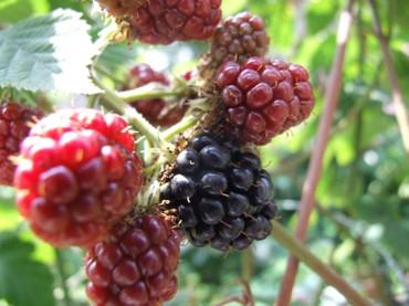 2007_0706blackberry