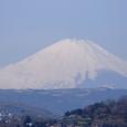 The white Fuji