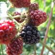 2007_0706 blackberry