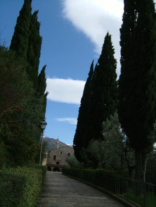 cipressi e Convento di San Damiano