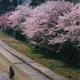 Sakuramichi_kanazawa_06